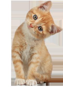 חבילה לחתול