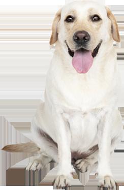חבילה לכלב גדול