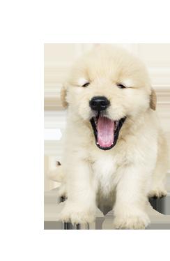 חבילה לכלב גור
