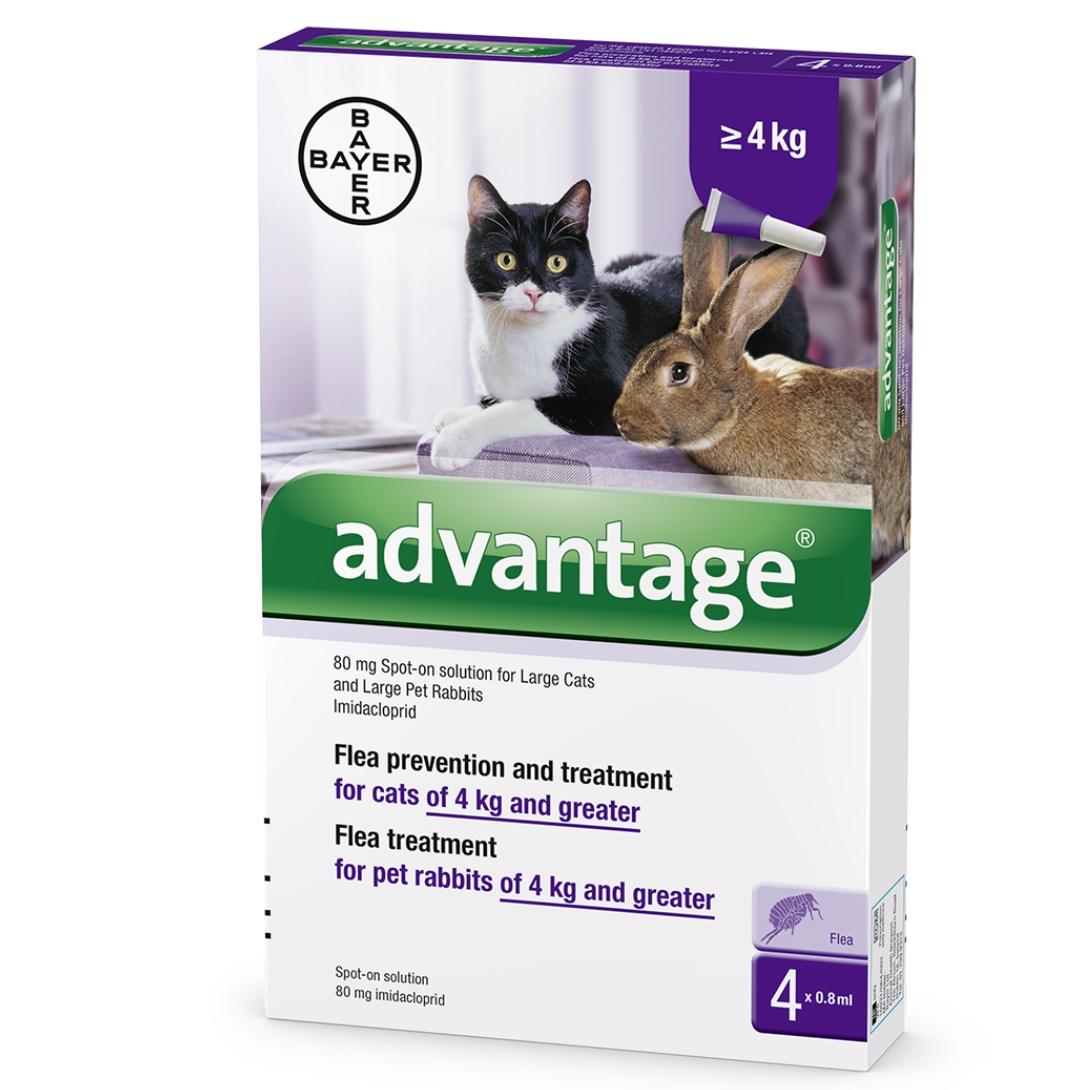 """אדוונטג' לחתולים במשקל מעל 4 ק""""ג"""